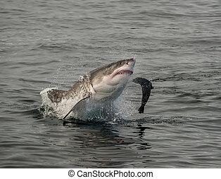 破ること, 大きく 白い 鮫