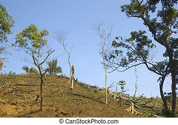 破壊, 森林