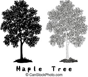 碑文, 木, シルエット, かえで, 輪郭
