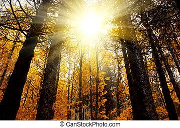 神秘主義である, 森林