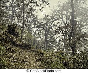 神秘主義である, 霧, 古い, 森林