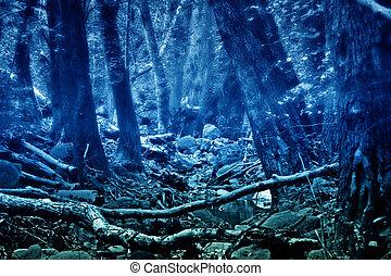 神秘主義者, colorized, 森林