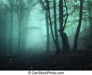 神秘的, 古い, 朝, 秋の森林, 暗い, fog., crimea