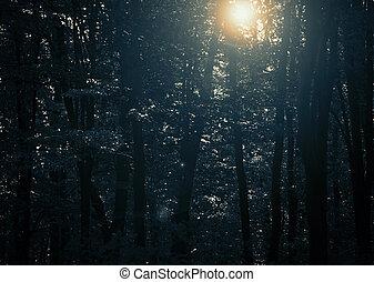 神秘的, 森林