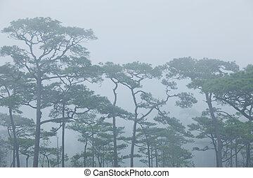 神秘的, 霧が濃い