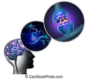 神経学, 解剖学