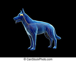 神経質, 犬, システム
