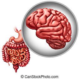 神経質, enteric, システム