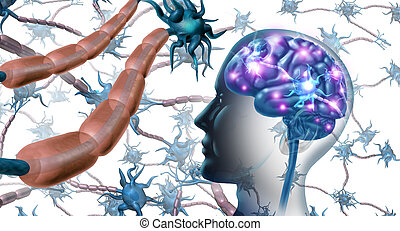 神経, 細胞, 中, 脳