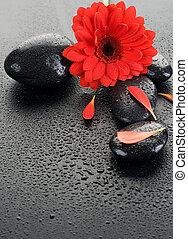 禅, エステ, ぬれた, 石, そして, 赤い花