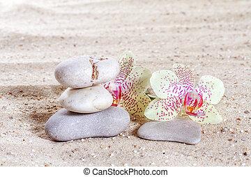 禅, 砂, 蘭, 石