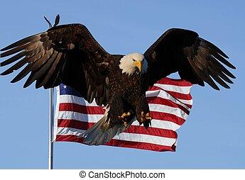 禿的鷹, 美國旗