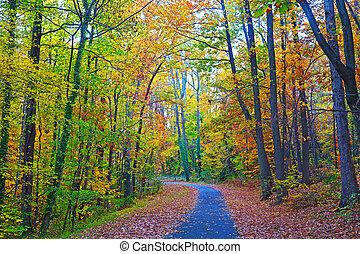 私達, 全国樹木園, 中に, ∥, 秋, ワシントン, dc., 道, 枠にはめられた, によって, カラフルである, 紅葉, 中に, ∥, 密集している, thicket.