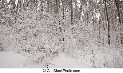 私達, 定めなさい, 小枝, because, 森林, すべて, 薮, いいえ, 雪で覆われている, 見なさい、, 木...