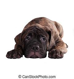 私, 概念, 許しなさい, 黒, あなた, 子犬, お嬢さん, ∥あるいは∥