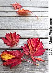 秋かえでリーフ, 上に, 木製のベンチ