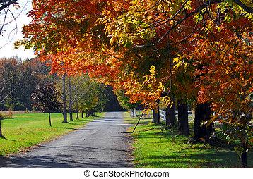 秋の木, 上に, a, 田舎の道路, 風景