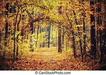 秋の森林, 小道