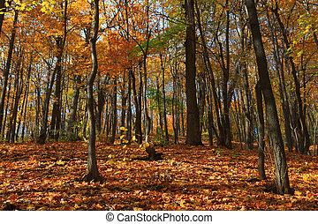 秋の森林, 現場