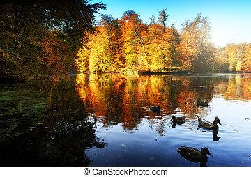 秋の森林, 風景, 湖