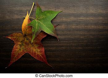 秋休暇, 上に, 木, 背景
