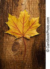 秋天葉, 在上方, 老, 板