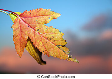秋天, 下降葉