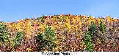 秋天, 全景