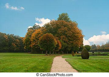 秋天, 公園, witj, 鮮艷, 被給上色, 樹