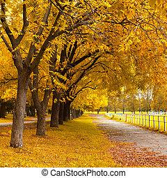 秋天, 在, a, 公園