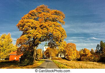 秋天, 在, svennevad, 瑞典