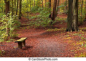 秋天, 在, the, 森林