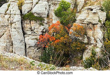 秋天, 山, 植物群