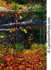 秋天, 森林, 以及, 河