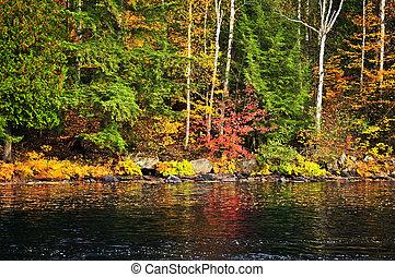 秋天, 森林, 以及, 湖岸