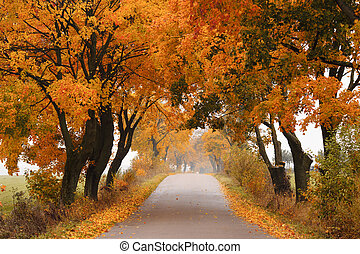 秋天, 楓樹, road.