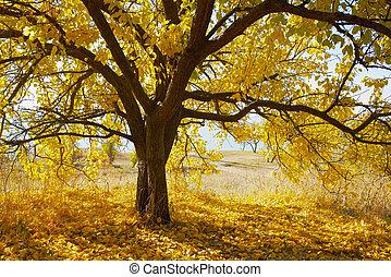 秋天, 樹, 由于, 黃色 葉子
