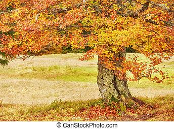 秋天, 樹, 由于, 黃色, 變為葉子