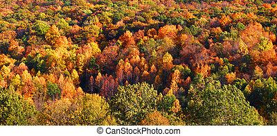 秋天, 樹, 背景