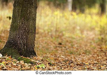 秋天, 橡木, 樹, 公園