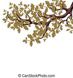秋天, 橡木, 被隔离, 樹, 大, 背景。, 插圖, 分支, acorns., 白色, yellowed