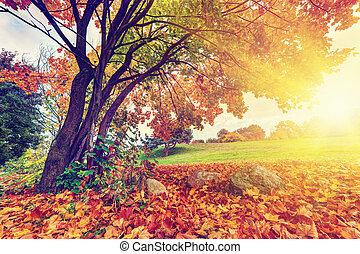 秋天, 秋天, 公園, 鮮艷, 離開