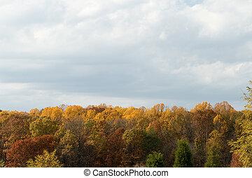 秋天, 秋天, forrest, 樹, 黃色, 以及, 紅色, 灰色的天空云