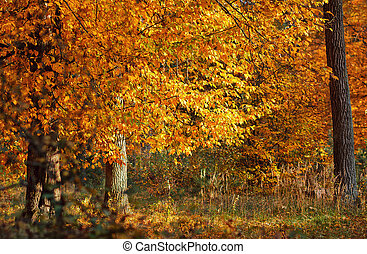 秋天, 秋季离去, 樹