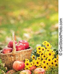 秋天, 籃子, 蘋果, 紅色