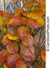 秋天, 紅的葉子