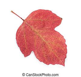 秋天, 紅的葉片