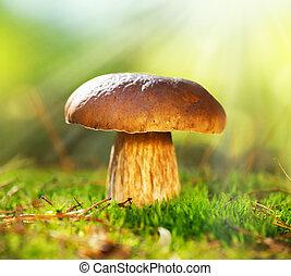 秋天, 蘑菇, boletus, forest., cep, 生長