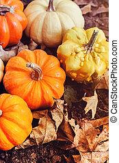 秋天, 裝飾, 彙整, 南瓜