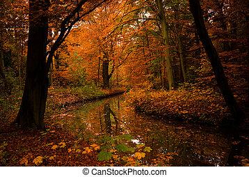 秋天, 顏色, 在, the, 森林